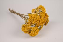 x065hm Achillée séchée naturelle jaune H55cm