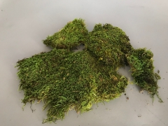 x070ab Box of preserved moss 500g