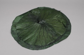 x071ab Pack of 3 Green lotus leaves stabilized