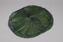 x071ab Sachet de 3 feuilles de lotus stabilisé vert