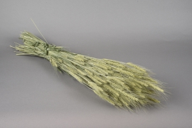 x074dn Bunch of natural dried barley H65cm