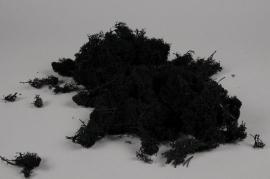 x075ab Mousse Islande noire préservé 500g