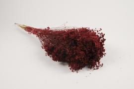 x080kh Broom bloom séché rouge H55cm