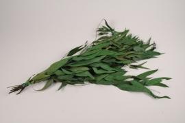 x082kh Eucalyptus willow stabilisé vert H60cm