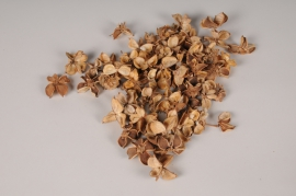 x085ec Cosses de coton séchées naturelles 500g