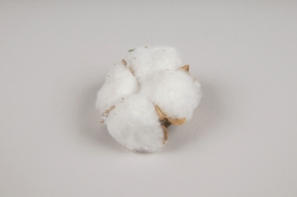 x086ec Pack of 12 dried cotton blossom D4cm