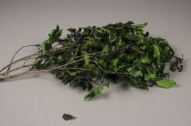 x091ab Green preserved pittosporum H50cm