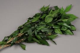 x092ab Botte de lierre vert préservé H60cm