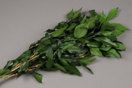 x092ab Bunch of preserved green ivy H60cm