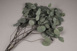 x095ab Green preserved eucalyptus populus H62cm