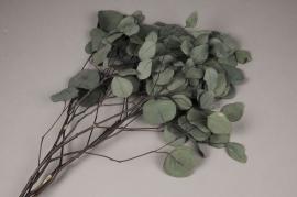 x095ab Paquet d'eucalyptus populus stabilisé vert H62cm