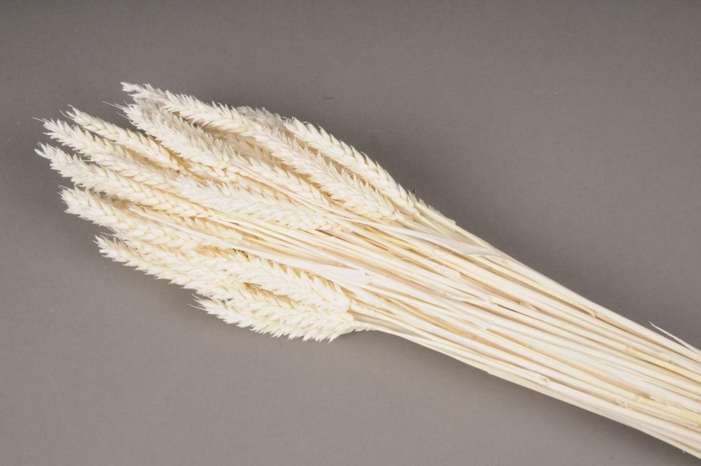 x099ab Bleached dried wheat H70cm