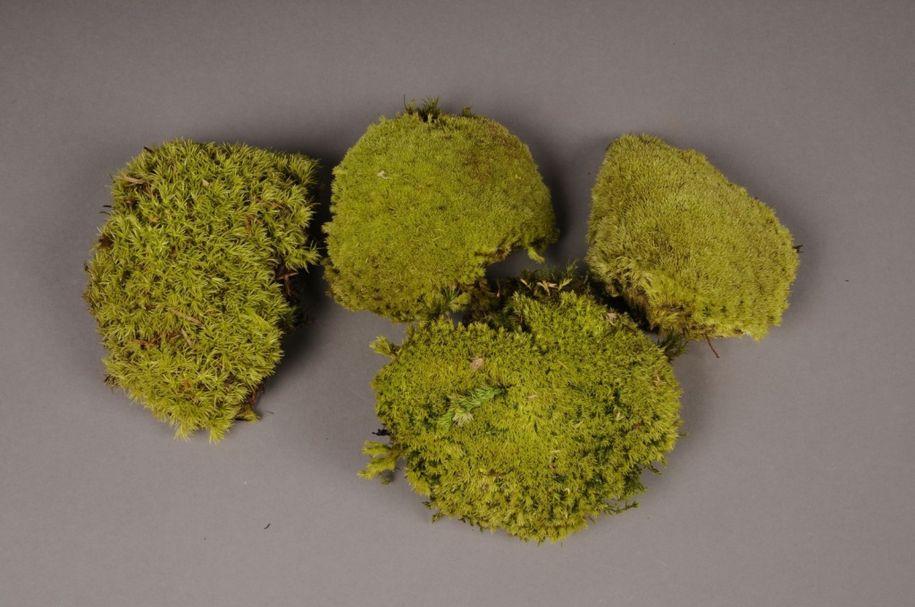 x100ab Box of preserved moss