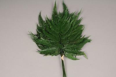 x101ab Green preserved fern D40cm