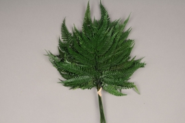 x101ab Green preserved fern D40cm