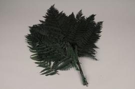 x103ab Green preserved fern D60cm