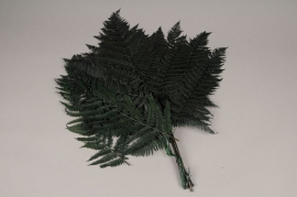 x103ab Green preserved fern D60cm