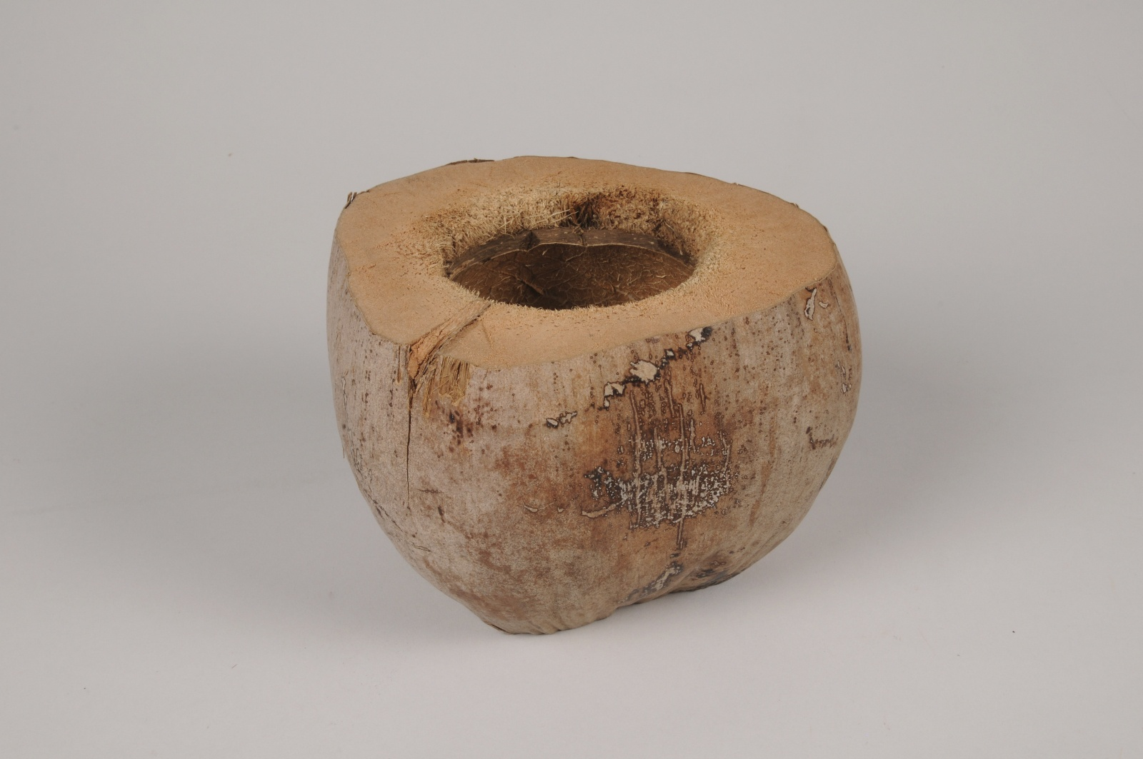 x104ec Noix de coco naturelle D18cm H12.5cm
