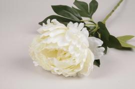 x118am Pivoine artificielle blanc crème H62cm