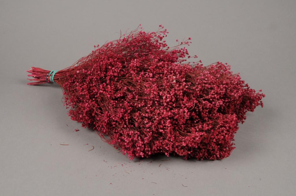 x122ab Broom bloom séché fuchsia H50cm