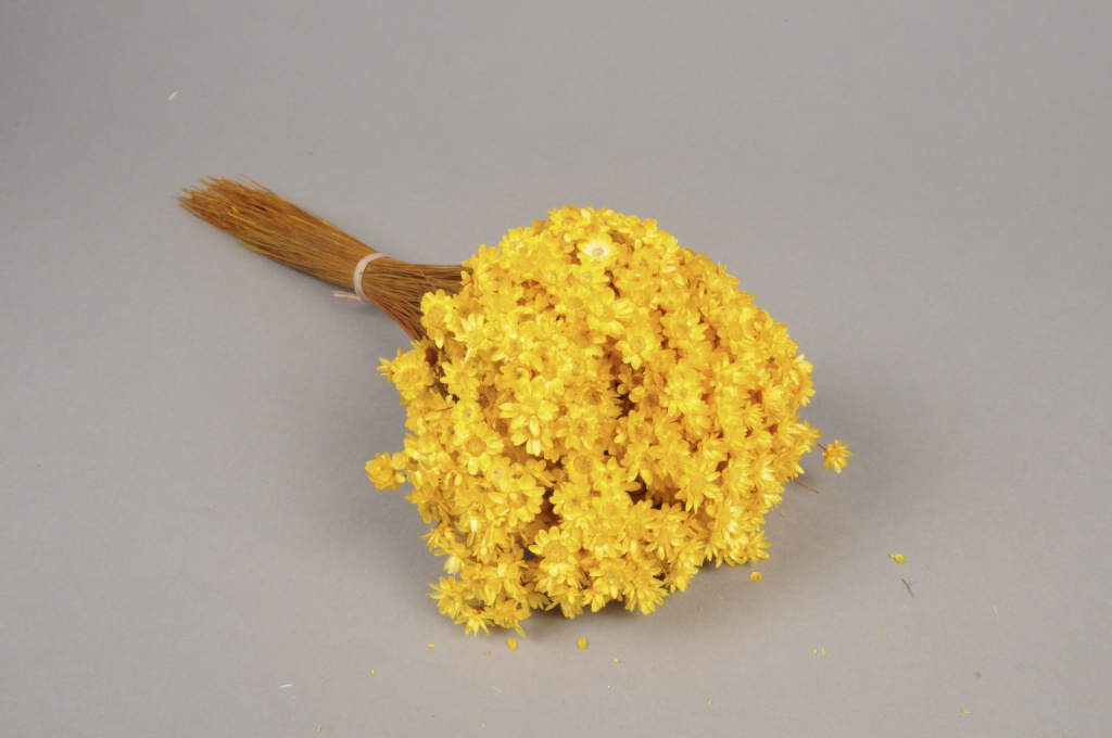 x123ab Yellow dried glixia H40cm