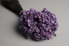 x126ab Bunch of purple dried glixia H50cm