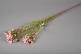 x128ee Artificial pink wax H80cm