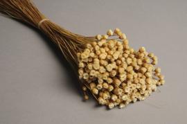 x133ab Bunch of dried natural jazilda H50cm