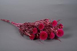 x134ab Echinops préservé fuchsia D6cm H65cm