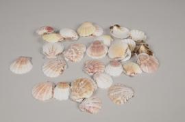 x137ec Coquillages pecten naturels 1kg