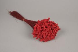 x143ab Botte de glixia séché rouge H40cm