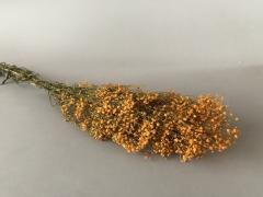 x156ab Gypsophile paniculé préservé orange H75cm