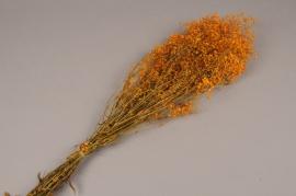 x156ab Orange preserved gypsophilia H75cm