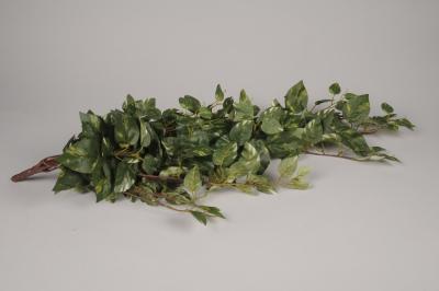 x156el Pothos artificiel panaché vert et blanc H84cm