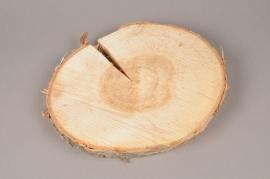 x156wg Slice of natural birch D26cm