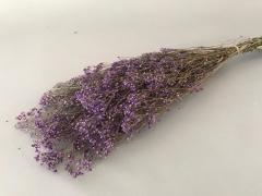 x158ab Gypsophile paniculé préservé violet H75cm