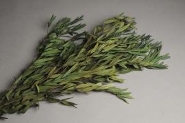 x167ab Paquet d'eucalyptus parfivolia stabilisé H60cm