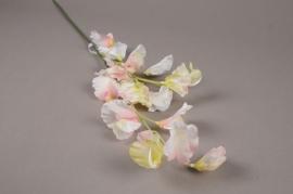 x185ee Pois de senteur rose pâle H65cm