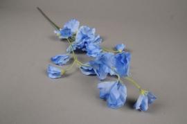 x187ee Pois de senteur bleu H67cm