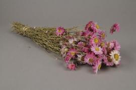 x209ab Botte d'acroclinium rose naturelle séchée H46cm