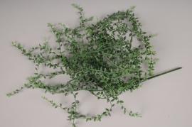 x215ee Piquet de senecio vert artificiel H95cm