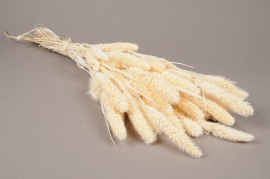 x222ab White natural dried foxtail H70cm