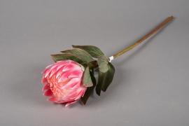 x226ee Protea artificiel rose H62cm