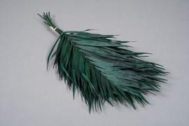 x232ab Areca stabilisé vert foncé H45cm
