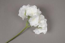x233fd Hortensia artificiel crème H22cm
