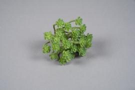 x251fd Succulente sedum artificielle verte H17cm