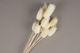 x260ab White dried mixed mini thistle H40cm