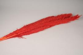 x267ab Botte de miscanthus rouge naturel séché H103cm