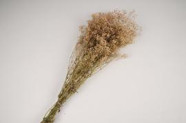 x286ab Gypsophile paniculé préservé rose H70cm