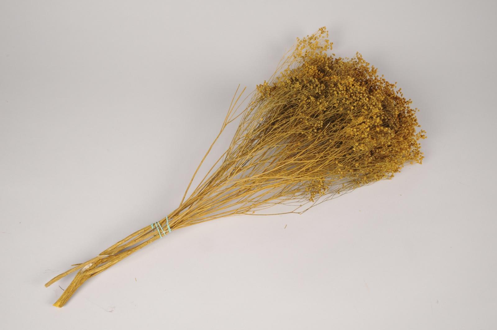 x288ab Broom bloom séché jaune moutarde H64cm